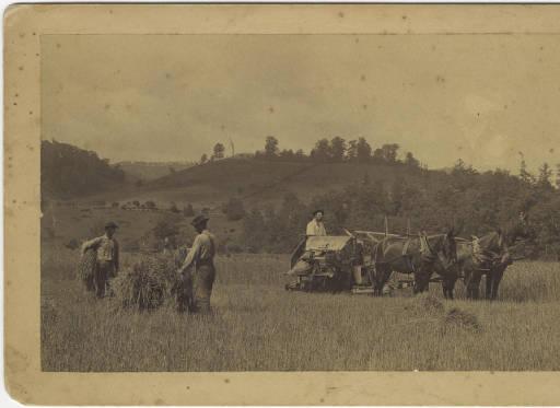 Men threshing wheat.